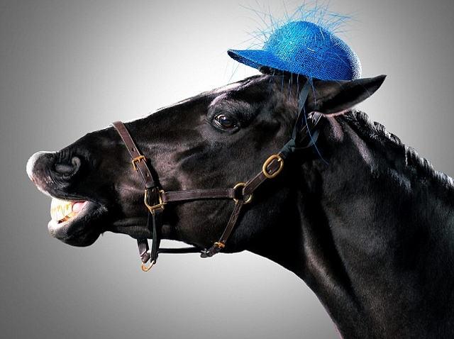 Un mod inedit de a promova noua colectie de palarii: cai in locul modelelor!